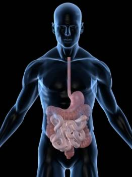 Gastroenterologists specialize in conditions of the gastroenterological tract